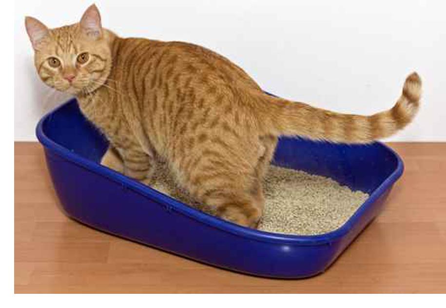 Sporcare in casa veterinari cester uleri - Gatto defeca per casa ...